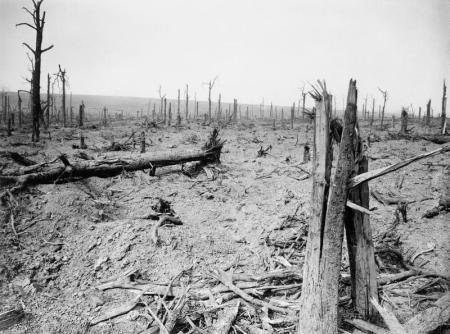 Bosc de Delville, ofensiva de la Somme, juliol de 1916. Fot. d'Ernst Brooks. Imperial War Museum collection